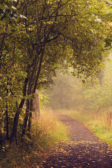 foggy autumn perthshire path 