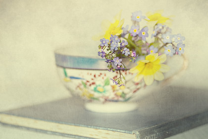 Brunnera-in-china-cup-texture 