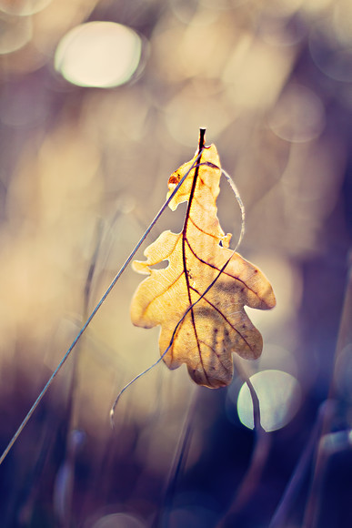golden-leaf-shadows