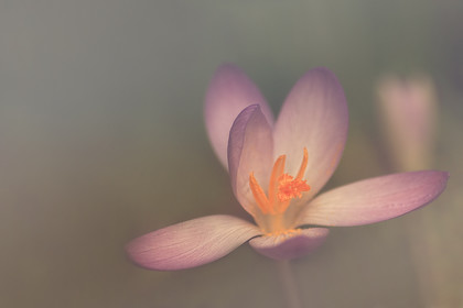 porange 