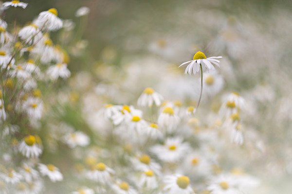 O5A3357 