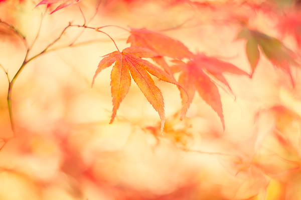 O5A9447 