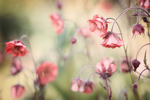 Click to view Rosie's flower photographs
